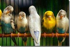 papagaio diferente