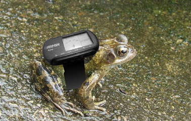 frogTracking_montage01.TRDCdC59Gx0Z.jpg
