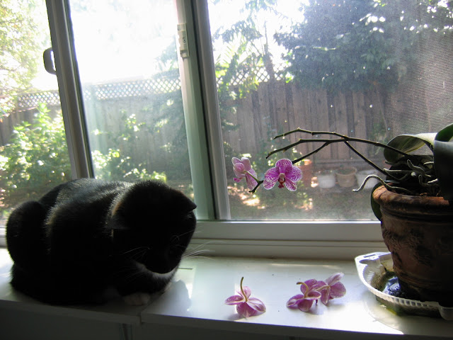 羊妈妈的第一盆兰花