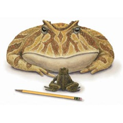 Toad Frog Pencil