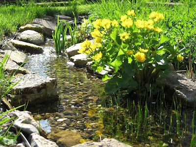 buttercups and sunshine at the little creek in our garden