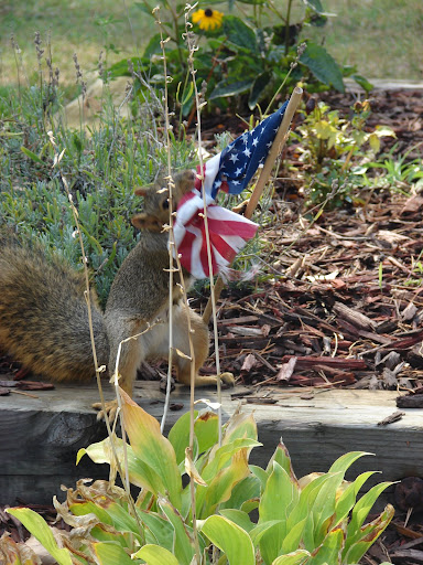 squirrel_steals_flag