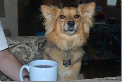 Coffee Dog...