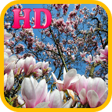 Best Spring Wallpapers