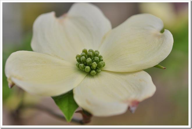 Ty program-flowers 004