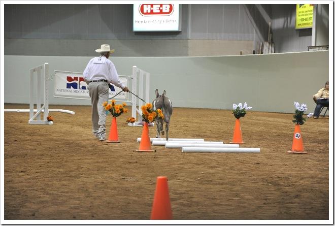 Donkey  show 249