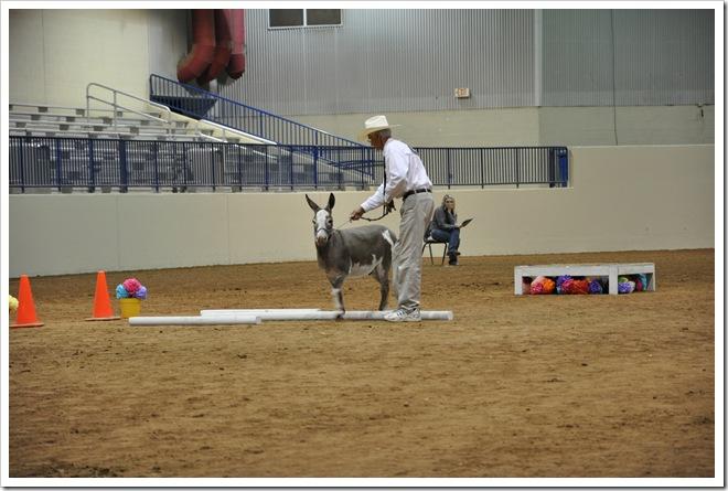 Donkey  show 259