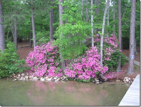 lake may 2010 030