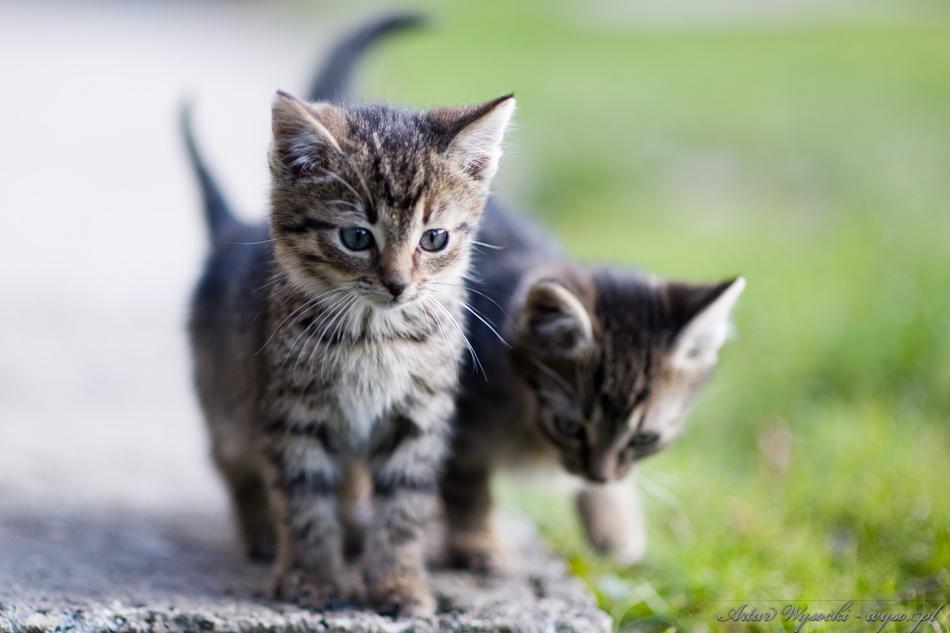 koty - wyso.pl