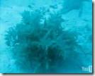 2009_05_11 - ninja seaweed