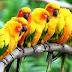 10 curiosidades sobre animais