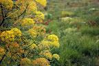 Rengarenk bitkiler