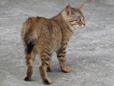 遇到的第一隻貓