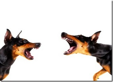 dogs_conflict