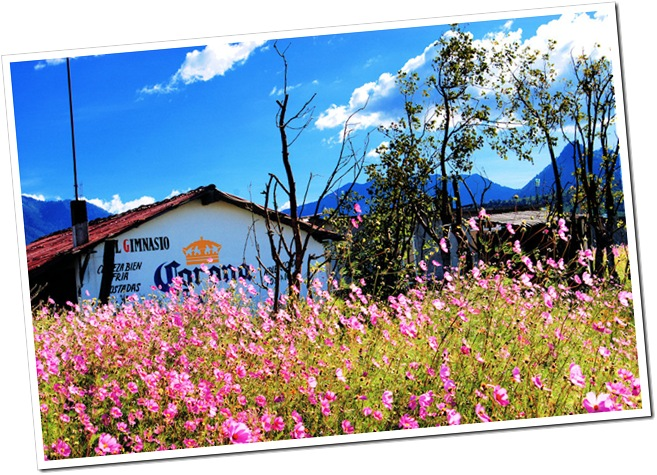 Wild Flowers of Patzcuaro