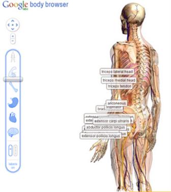 google-body-browser