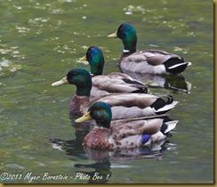 l Bidr-a-Thon _D7K5324 5324 May 14, 2011 NIKON D7000