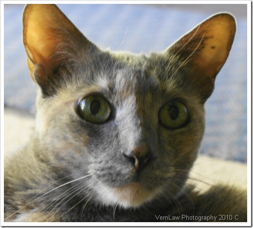 Sweet catDSC01286(1)