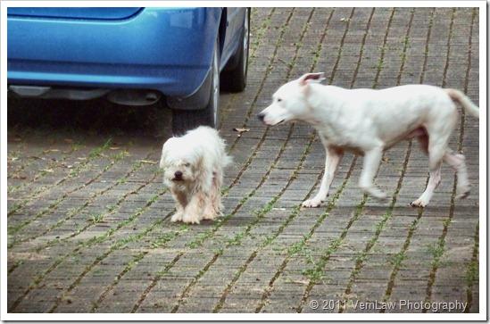 Dogsoutp1000367