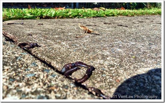 Earthwormsp1010432