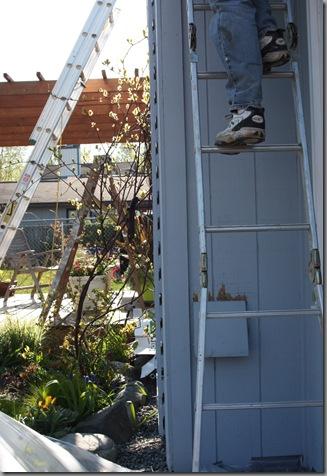 ladder 032