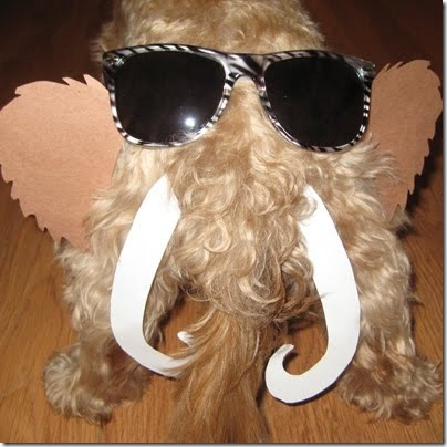 sunglasses_dog_butt_01_0014_Layer_24_full