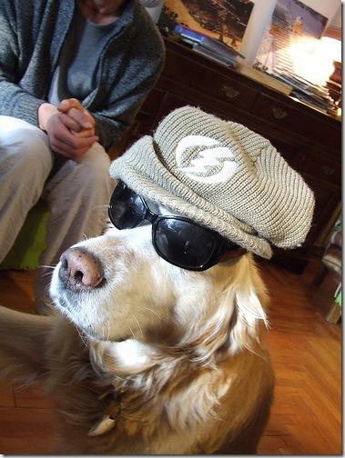 dog_hat_and_sunglasses