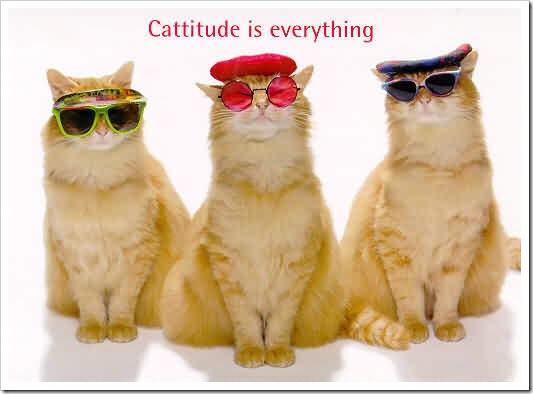 gatos- optimizado (396)
