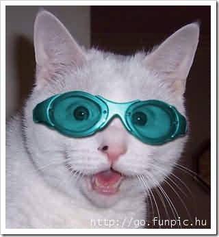 gatos- optimizado (63)