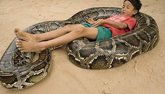 Foto de una serpiente enrollada que le sirve de cuna a un niño.