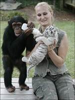 chimpance (11)