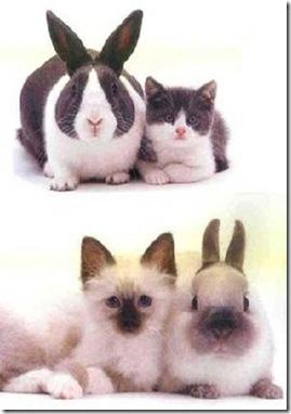animales parecidos (3)