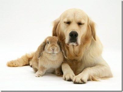 animales parecidos (4)