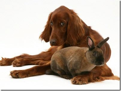 animales parecidos (7)