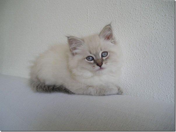 0 - gatitos elgallinero.blogspot.com (31)