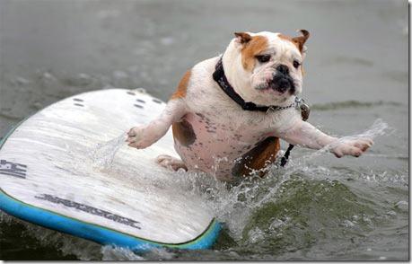 perros surf migallinero (3)