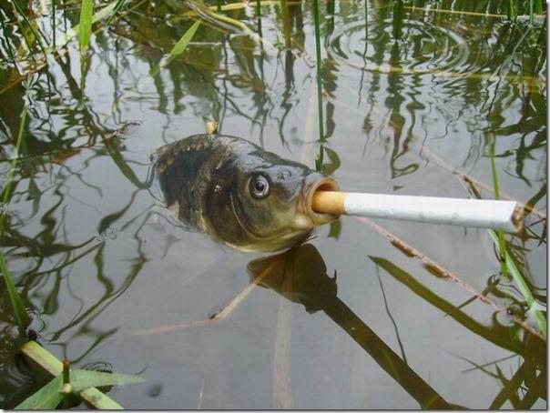 pez fumando