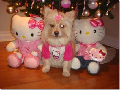 perro hello kitty migallinero.blogspot. com(6)