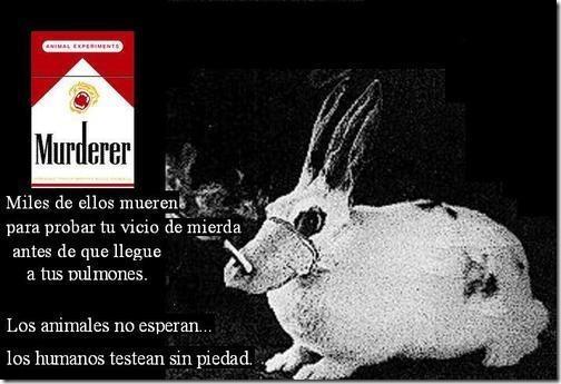 sin tabaco migallinero.blogspot (12)