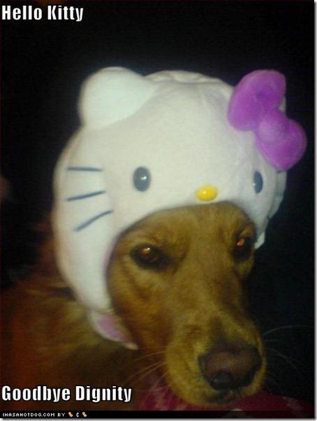 perro hello kitty mischuminadas (1)