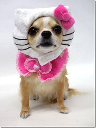 perro hello kitty mischuminadas (5)