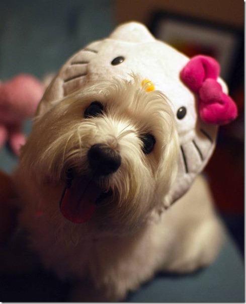 perro hello kitty mischuminadas (2)