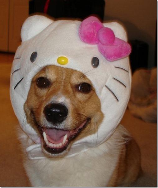 perro hello kitty mischuminadas (4)
