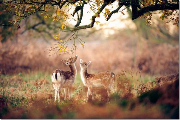 animales divertidos migallinero (6)