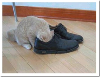 gato asfixiado migallinero (5)