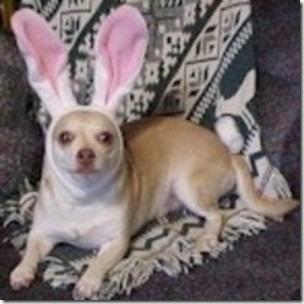 perros pascua (12)