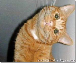 gatos migallinero (11)
