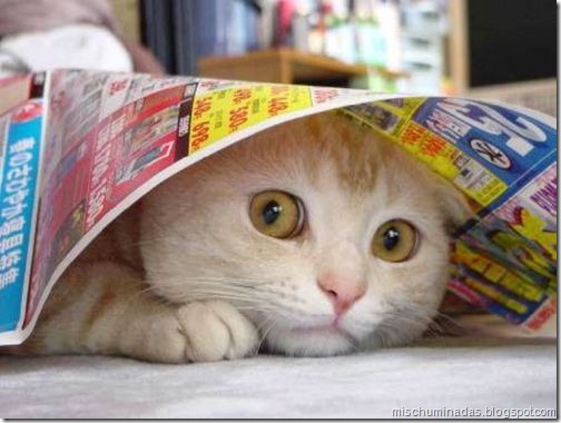 gatos migallinero (16)