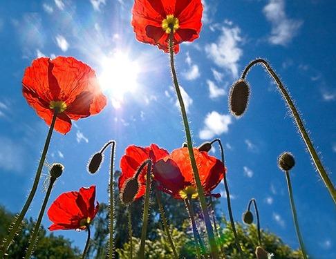 Каждый цветок у древних имел свое