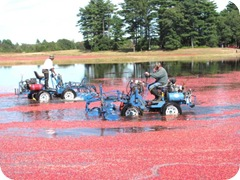 bog richard wet picking1